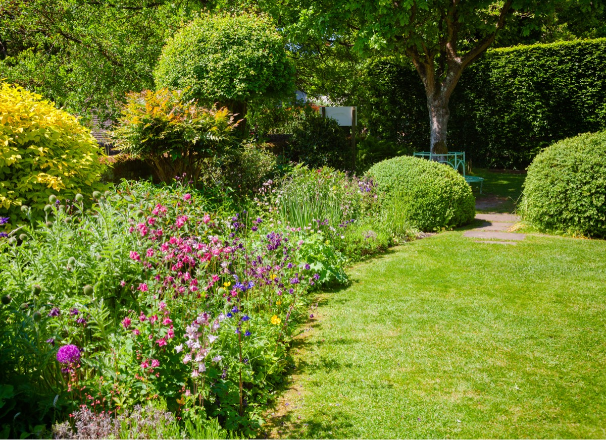 A green and blossoming garden on a warm bright summers day